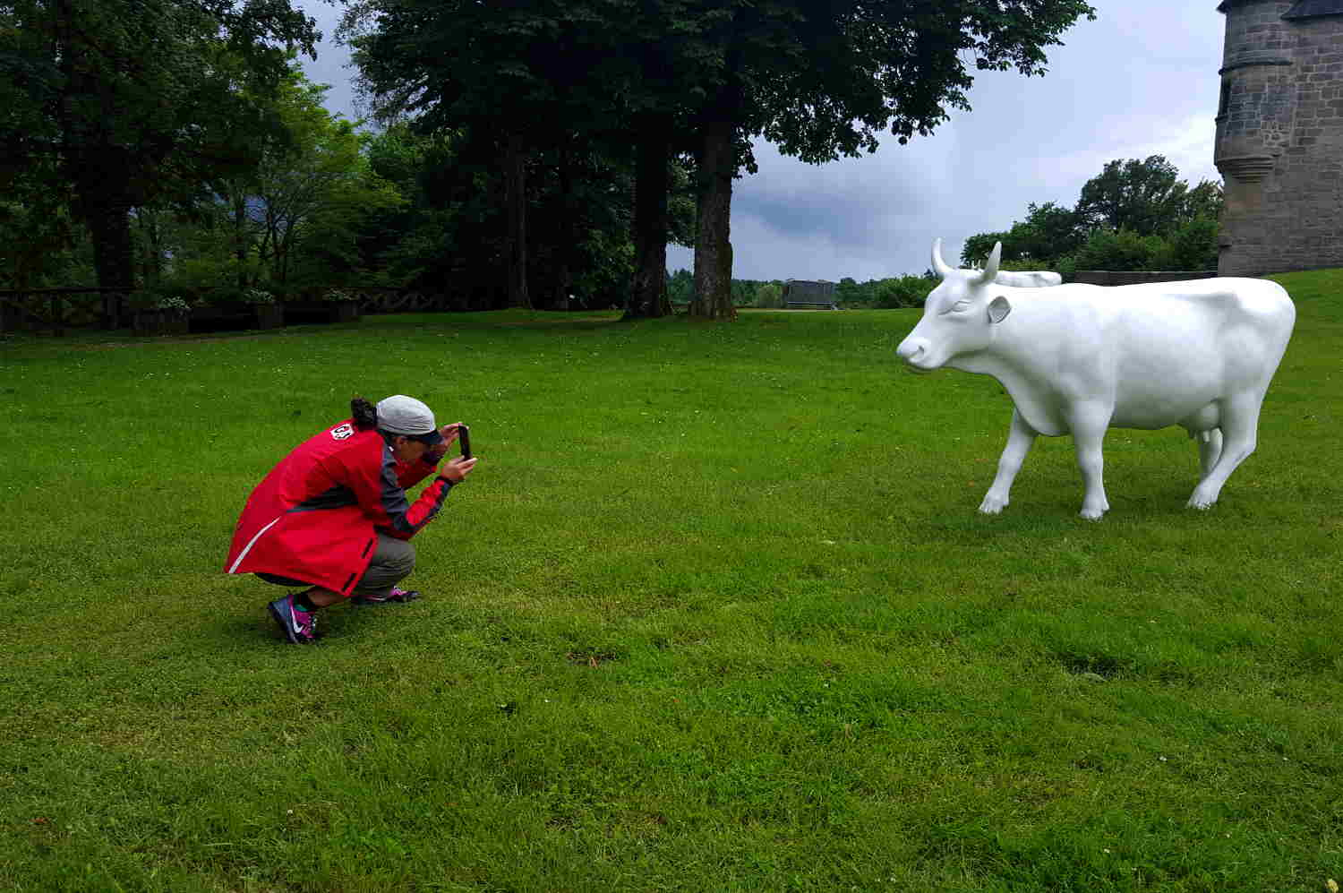 Cow photography